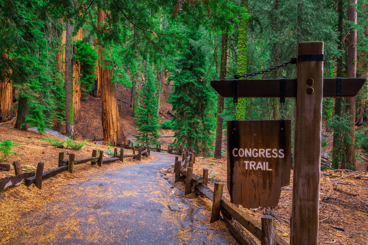 Trail winding through green forest with Congress Trail sign in foreground