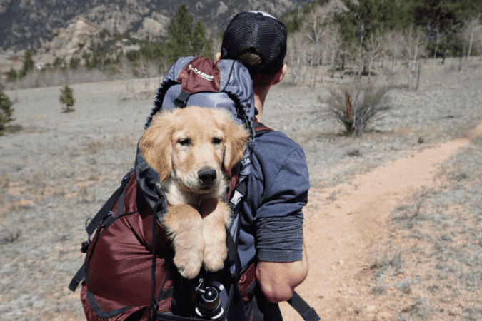 Man with a dog in a backpack