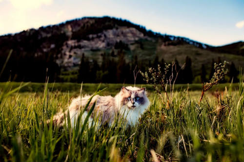 Avoid Long Hiking Trips with a Cat
