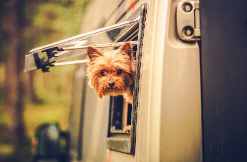 Dog in RV's window