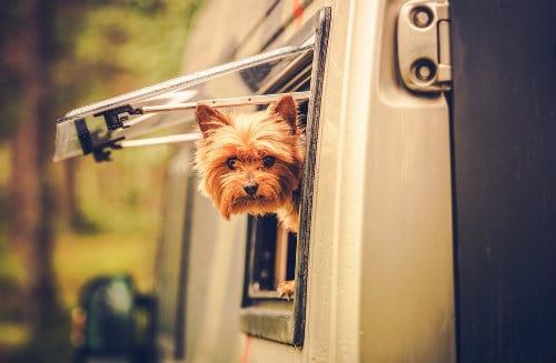 Dog in RV's window