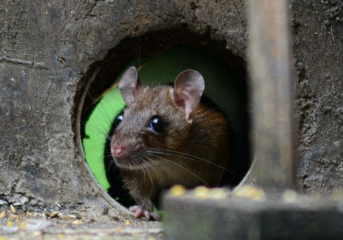Keep mice out of a camper