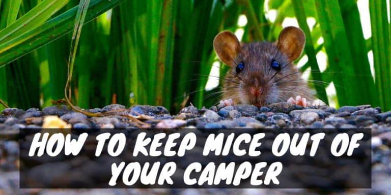 How to Keep Mice Out of Your Camper