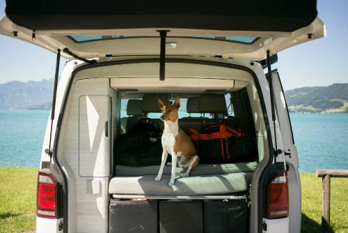 Pet protocol for campground